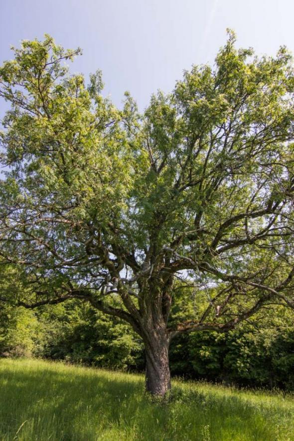 strom-roka-martin-babarik-3-z-4-683x1024.jpg