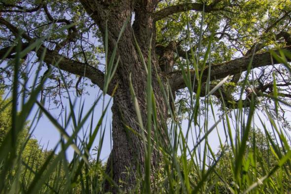 strom-roka-martin-babarik-2-z-4-1024x683.jpg